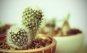 Como lidar com as dores do crescimento sem perder a cabeça