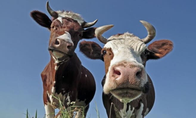 A Matriz BCG no ciclo de venda: como identificar vacas leiteiras e abacaxis
