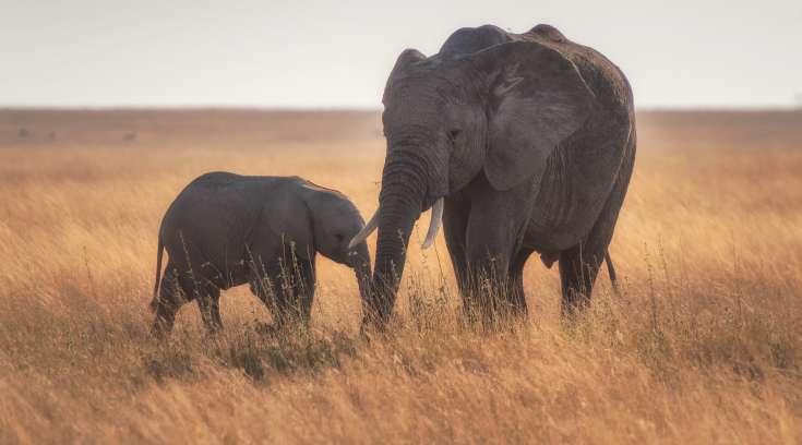 Fluxos culturais de trabalho: aquela é sua mãe montada no elefante?