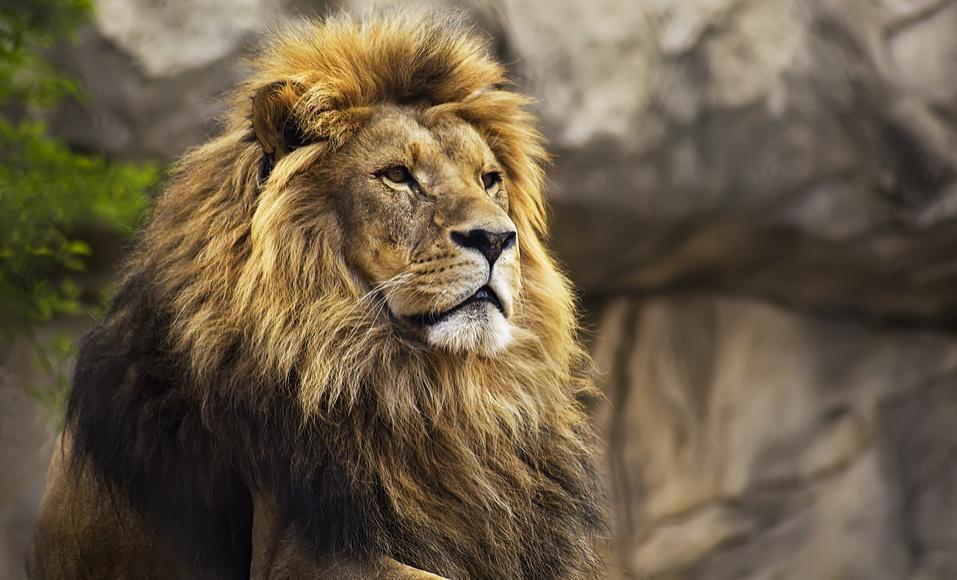 Comitê estratégico: enfrente um leão por dia, mas não sozinho