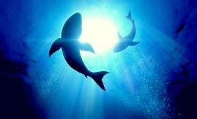 Além do pitch perfeito: como fazer tubarões morderem a isca